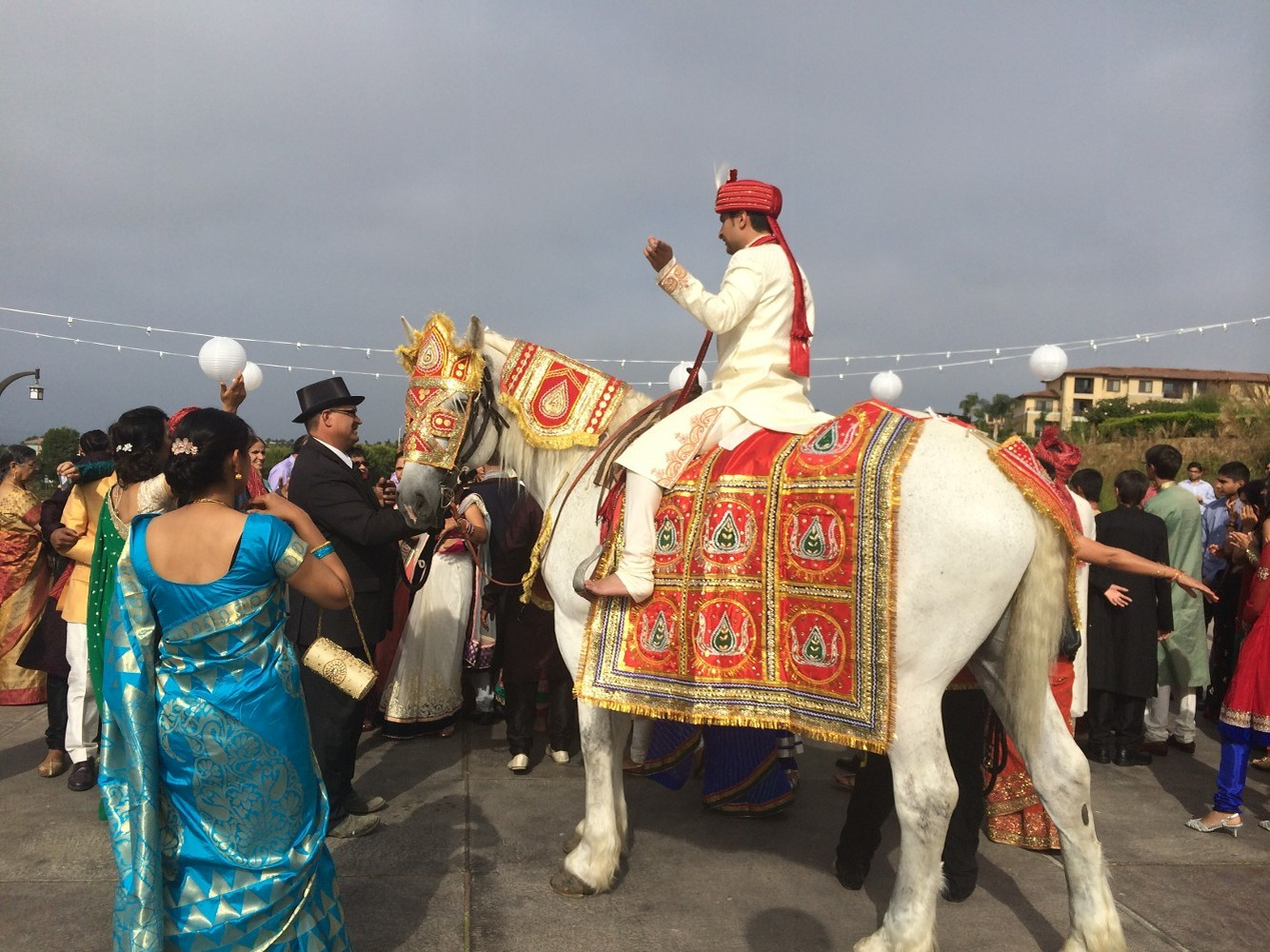 Baraat Horses Available for Traditional South East Asian Weddings