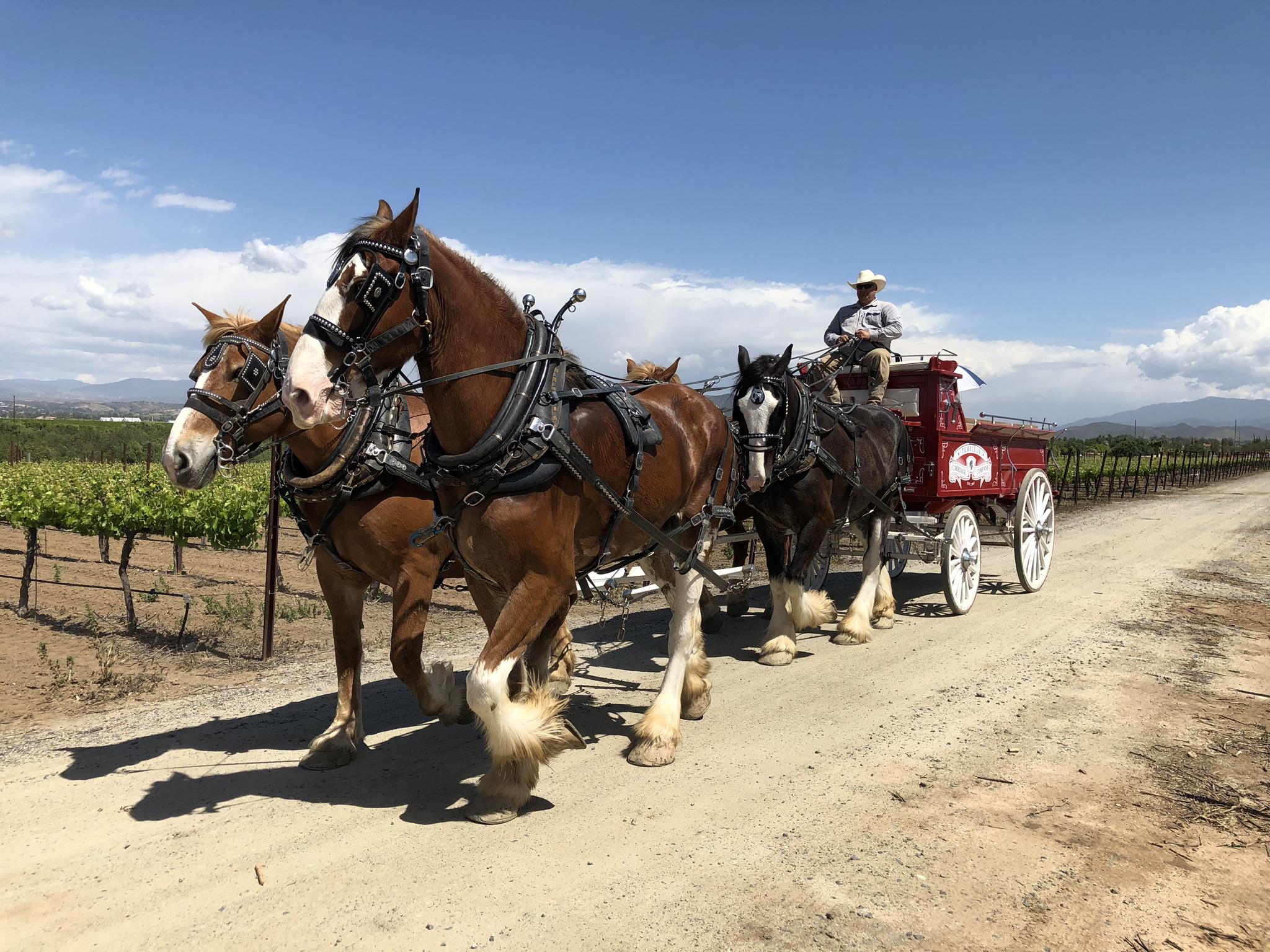 Horse Drawn Carriage Rides Temecula Ca Temecula Carriage Company